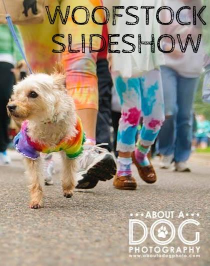 Tie-Dye Dog